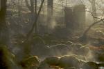 Vårmorgon i Åkulla bokskogar