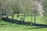 Hästhage i Valinge