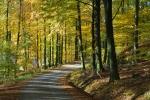 Vägen genom bokskogen