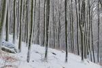 Vinter i bokskogen